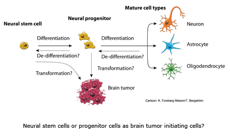 schematic drawing of brain tumor initiation